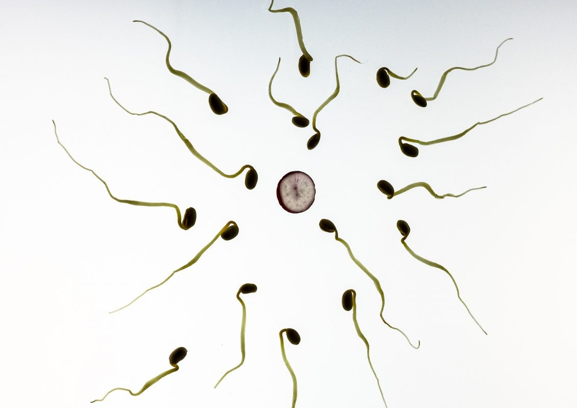 Dr.Paul Clayton - Egg and sperm race
